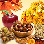 Autumn Harvest Fragrance Oil