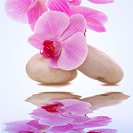 Orchid -  Fragrance Oil