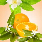 Orange Blossom -  Fragrance Oil