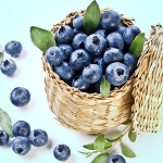 Blueberry - Fragrance Oil