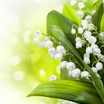 Lily of the Valley - Fragrance Oil