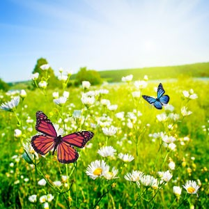 Butterfly Meadows