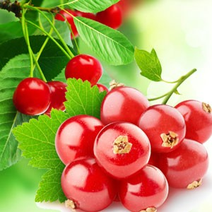 Red Currant Fragrance Oil
